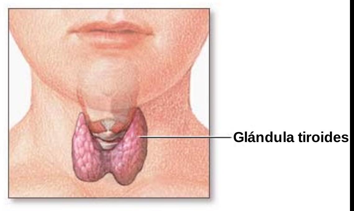 Glandula Tiroide Cirugia Robotica