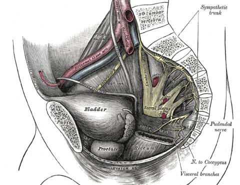 Nervio_Pudendo y Cirugia Robotica