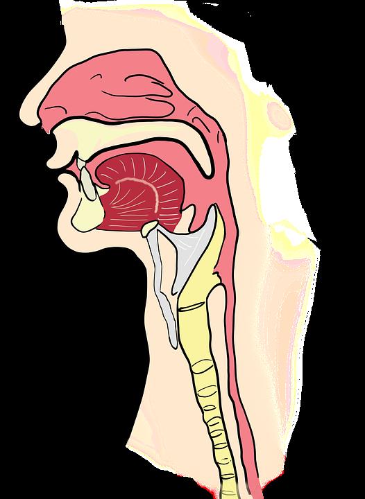 Cirugia Robotica en Otorrinolaringología