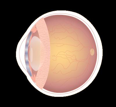 Robotica y retina