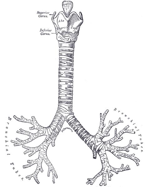 cirugia pulmonar