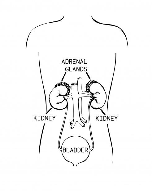nefrectomia y adrenalectomia remotas