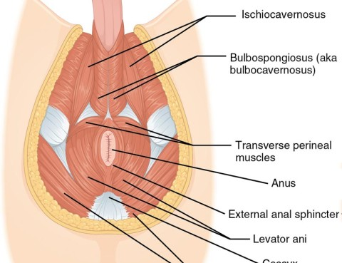 prostatectomia transperineal